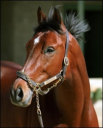 Two Miracles Named Alex: The Thoroughbred race horse Afleet