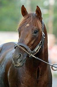 Smarty Jones Online Horse Betting
